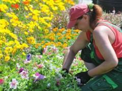 庭仕事、ショッピング ドイツ人の余暇