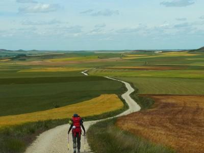 5週間にわたり、田舎道をただただ歩き続けたサンティアゴ巡礼。