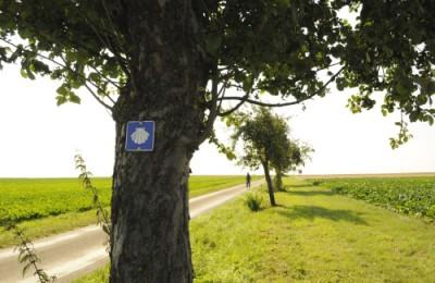 巡礼路のマークのホタテ印が道沿いの木に打ち付けられています。