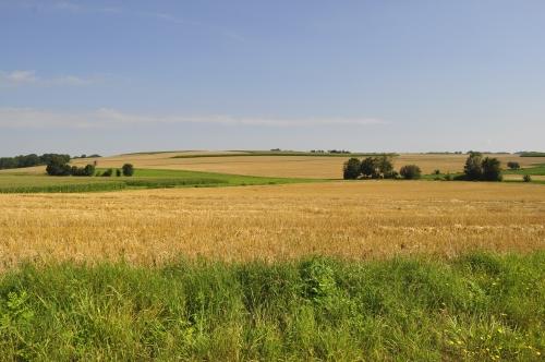 地平線まで黄金の麦畑!なかなか日本では見られない風景です。