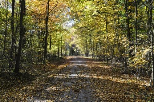 黄葉が美しいウッフェンハイム近郊の森。