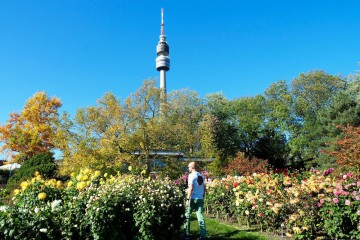 ヴェストファーレンパークのダリア園と園内に建つ「フローリアンタワー」 Photo: Aki SCHULTE-KARASAWA