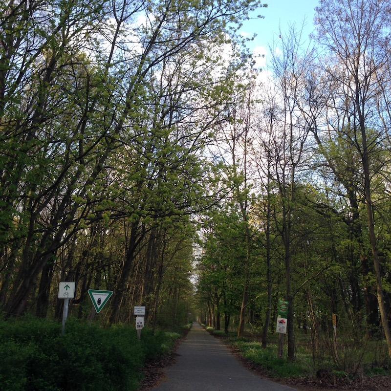 春を実感した森。歌詞の中の風景を見つけた!と、嬉しくなった。大学時代に先生から「細胞レベルで自然を感じてから声を出しなさい」と言われていたことが、スッと理解できた場所。