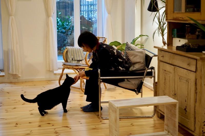 自宅で愛猫と遊ぶひととき。