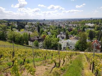 ネロベルクのブドウ畑。ヴィースバーデンの街が一望できます