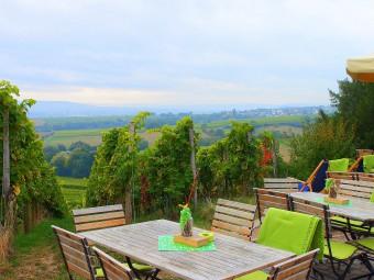 世界に名だたる銘醸畑シュタインベルク。ブドウ畑の景色を楽しみながらワインがいただけます!(期間要確認)
