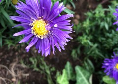 Freiburg お花