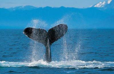 ハーフが遭うイジメ「クジラを食べる日本人って最低!」