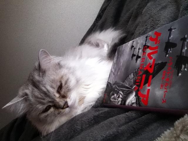 ⒸMarei Mentlein  猫なんです。