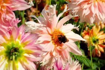 花から花へと虫たちも大忙し Photo: Aki SCHULTE-KARASAWA
