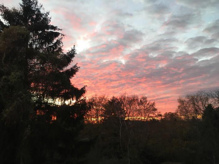 家から見える景色。たまに木にいるリスを見かけることがあります。 ©tomogermany