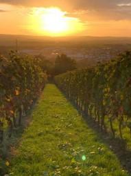 ワイン畑からの日の入り。©tomogermany