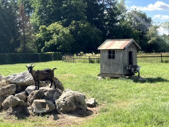 可愛い山羊が出迎えてくれました! @tomogermany